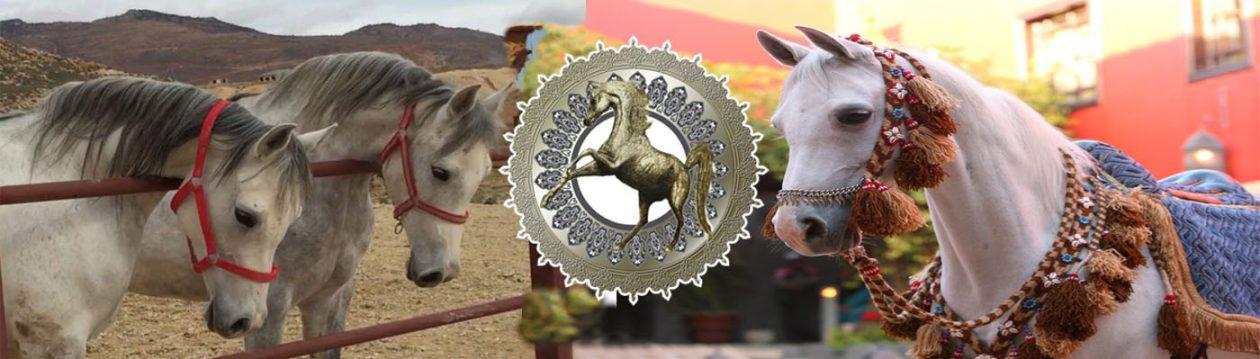 الجمعية السورية للخيول العربية الاصيلة