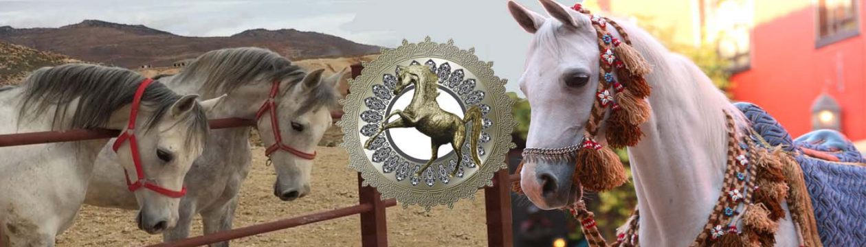 Syrian Arab Horse Association
